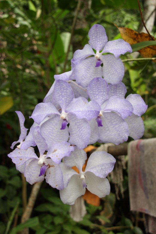 2008: Huay Nam Dang NP: bloemetjes jungle.