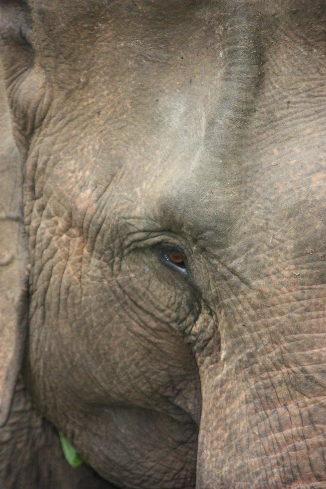 2008: Huay Nam Dang NP: door het oog van de olifant.