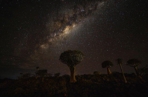 Melkweg boven het kokerboomwoud