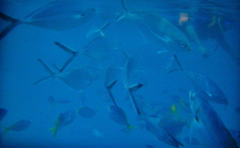 Hoofdfoto bij reisverhaal 'A 'Fish-eyes' view'