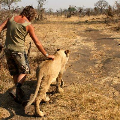 Voorvertoning Walking with lions