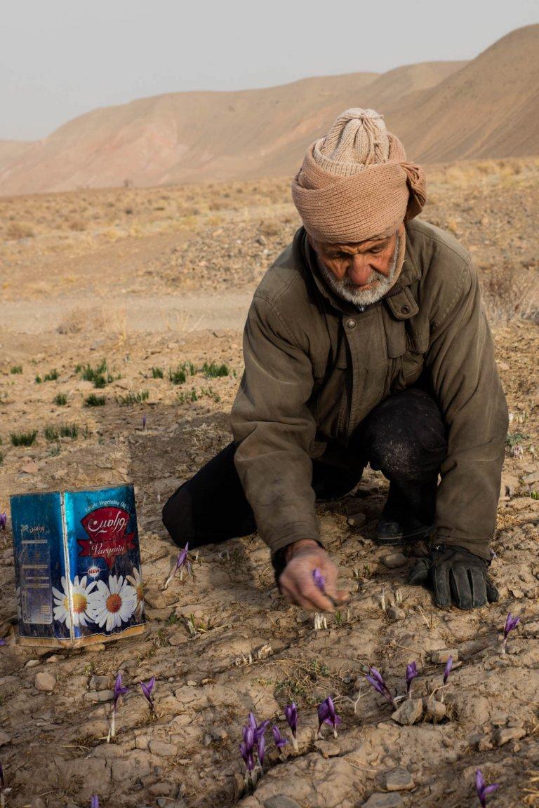 Hoofdfoto bij reisverhaal 'Iran: daarom is saffraan zo duur!'