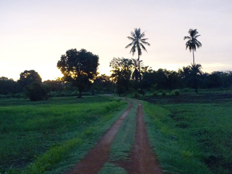 De weg naar het Tented Camp Hondo Hondo, dat in het Swahili neushoornvogel betekent