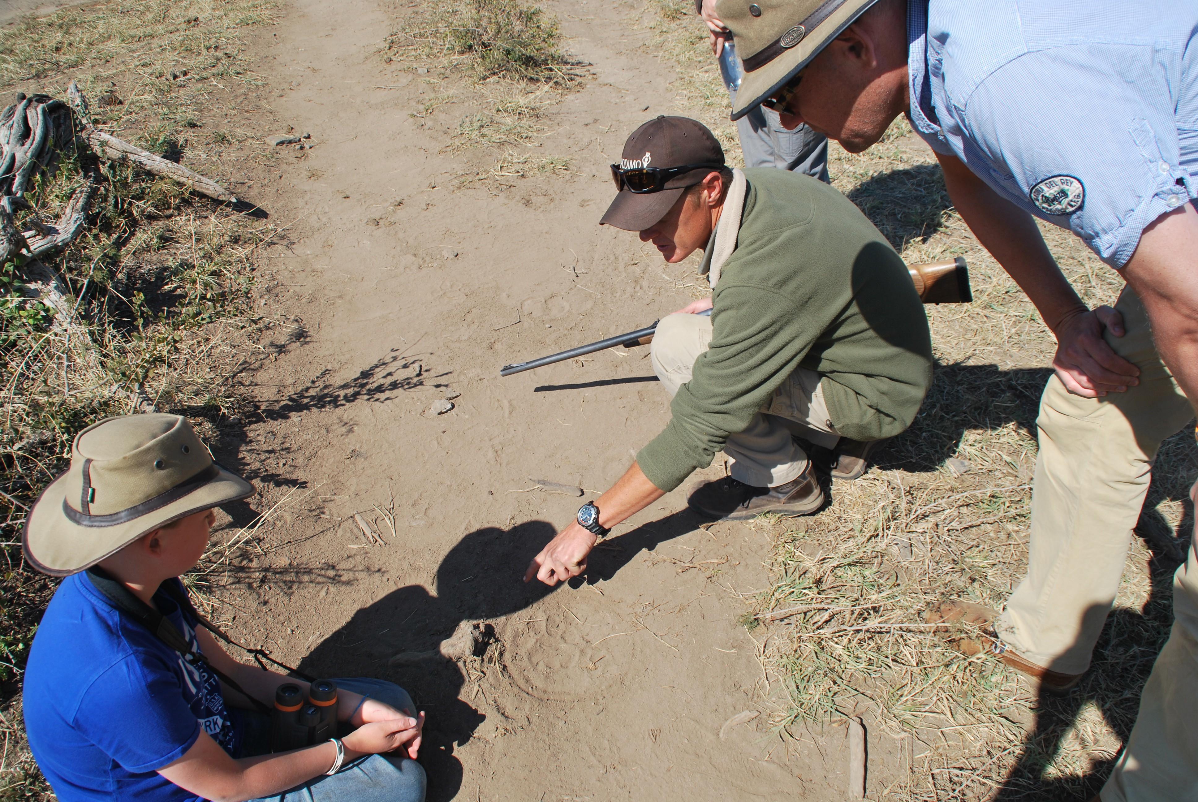 Herman wijst ons op sporen in het zand
