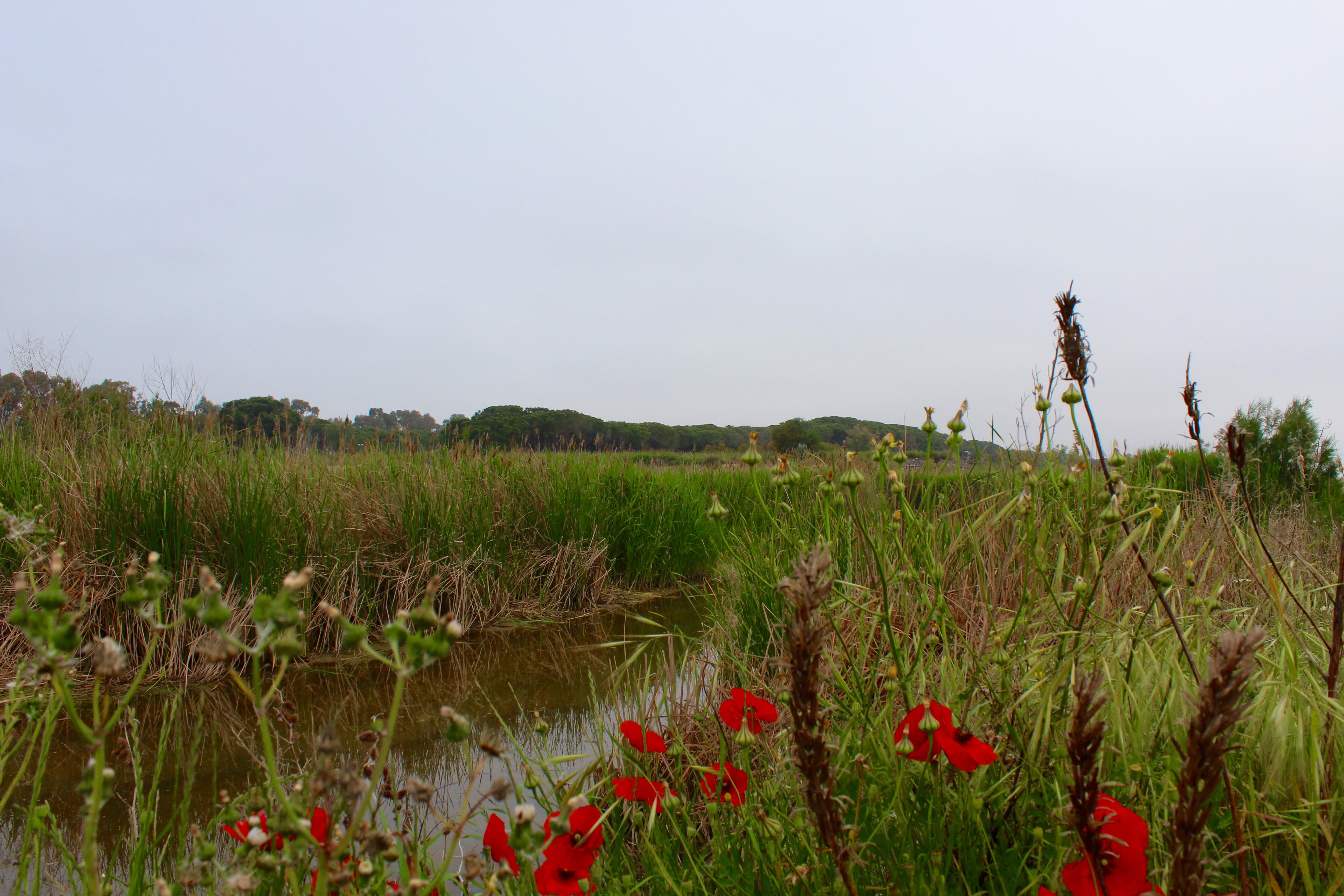riviermonding aan het strand nabij salicetti