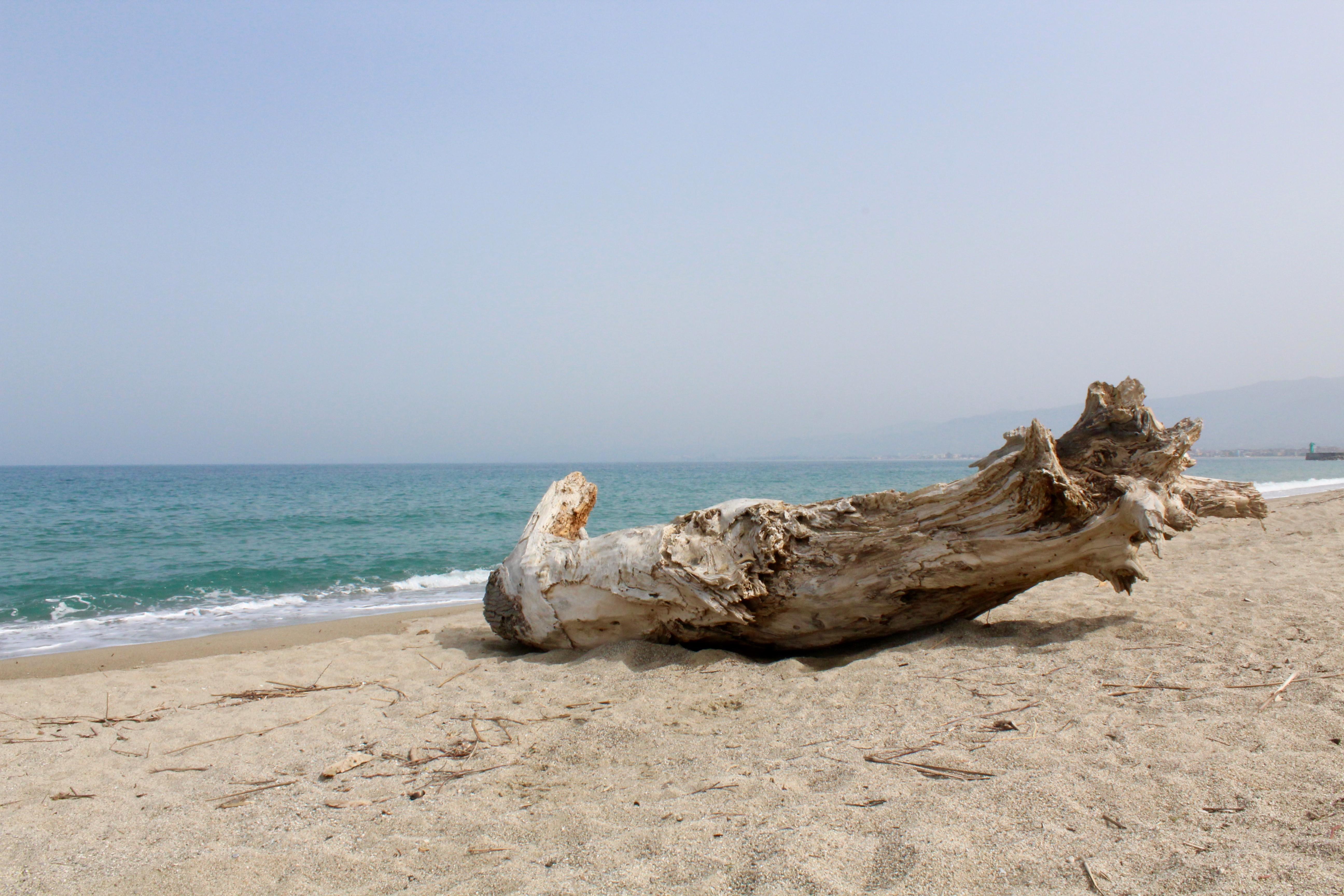 Boomstronk aan de Ionische zee