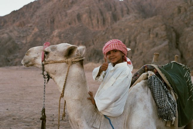 Local op kameel in Sinaï