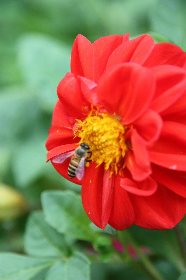 2008: Chiang Mai: bloem met wesp