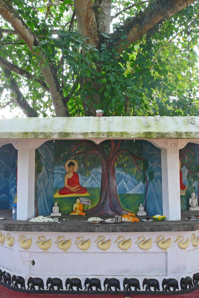 Onder de Bodhiboom