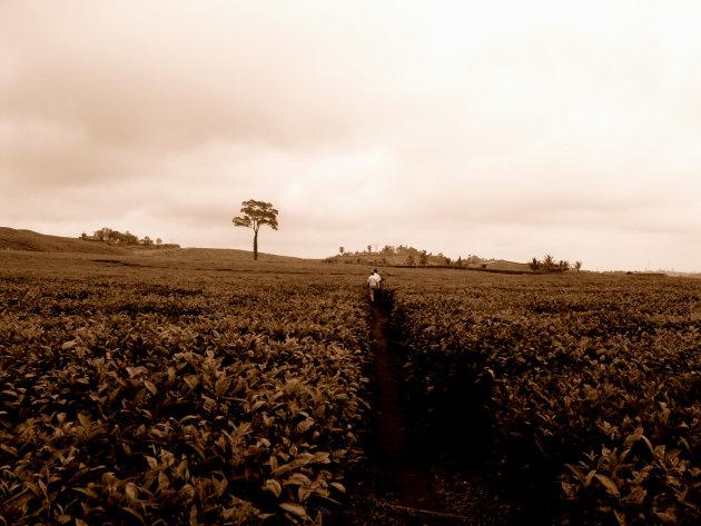 theeplantage