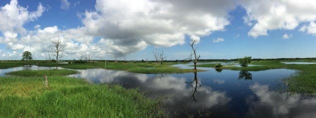 Moerasgebied Bigipan