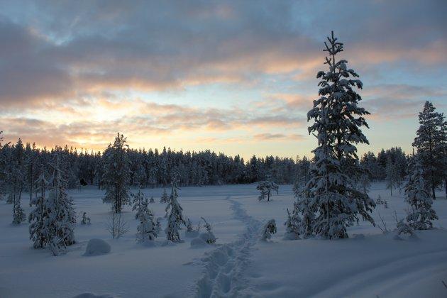 Pad door de sneeuw in Fins Lapland