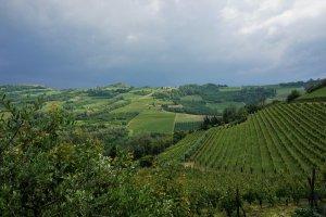 wijngaarden Monferrato