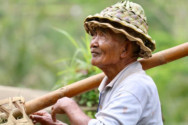 Bezoek de rijstvelden van Bali