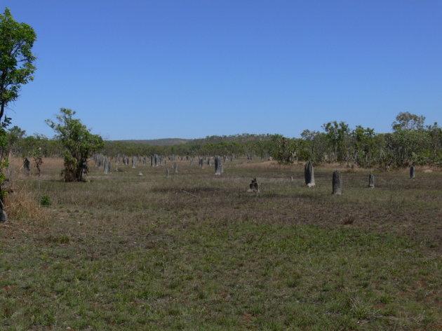 Termietenheuvels in Litchfield NP