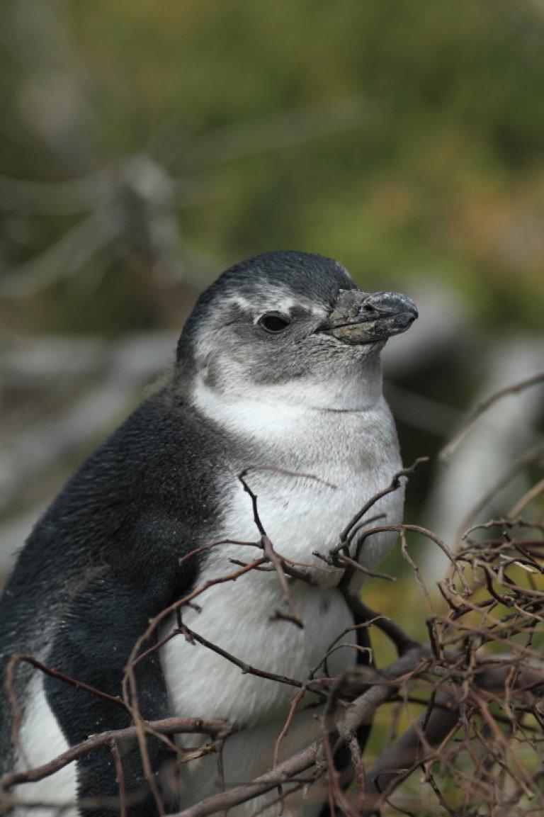 Hoofdfoto bij reisverhaal 'Dag 5 Pinguïns & reisdag naar St Lucia'