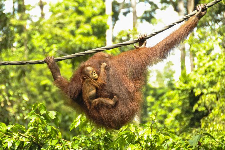 Hoofdfoto bij reisverhaal 'Rondtrekken op Borneo, een jungletocht en duiken langs de kust'