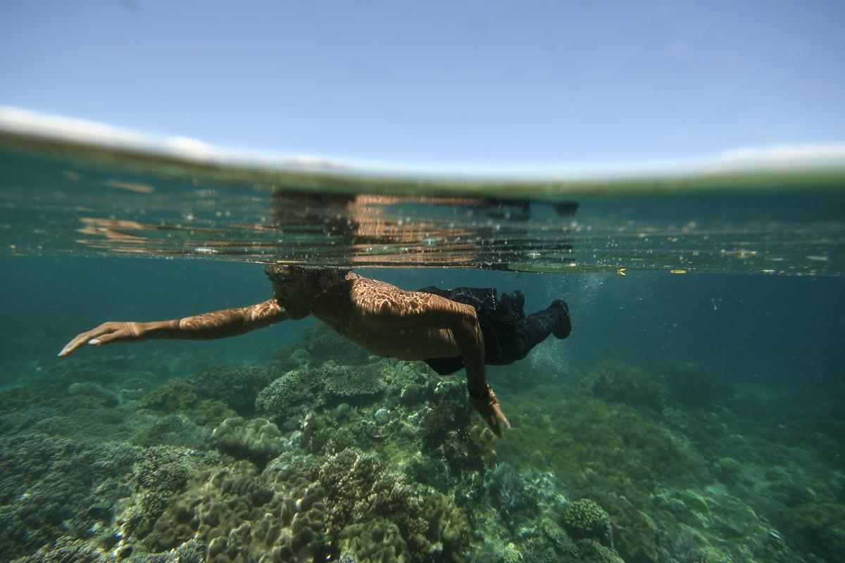 7 waterdiertjes die gevaarlijker zijn dan een witte haai