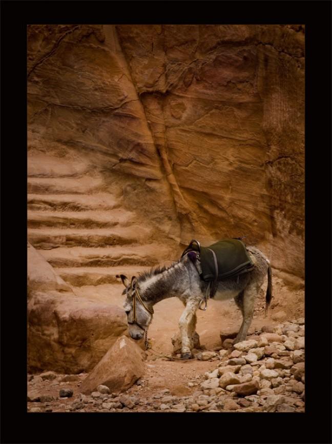 Petra's donkey