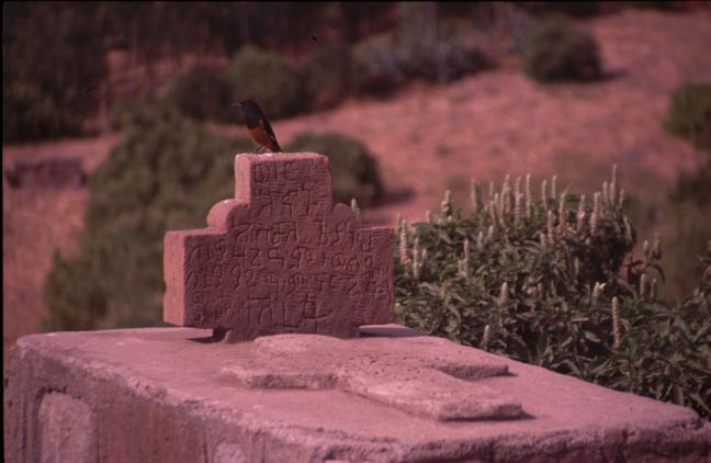 vogeltje op graf