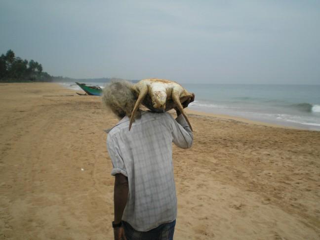 Sri Lanka - een schildpad gevangen