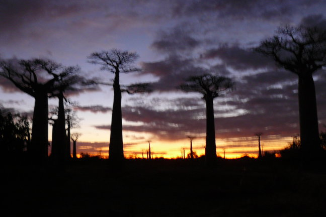zonsopkomst Morondava