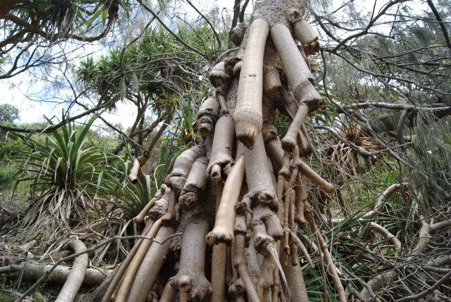 Strange tree..