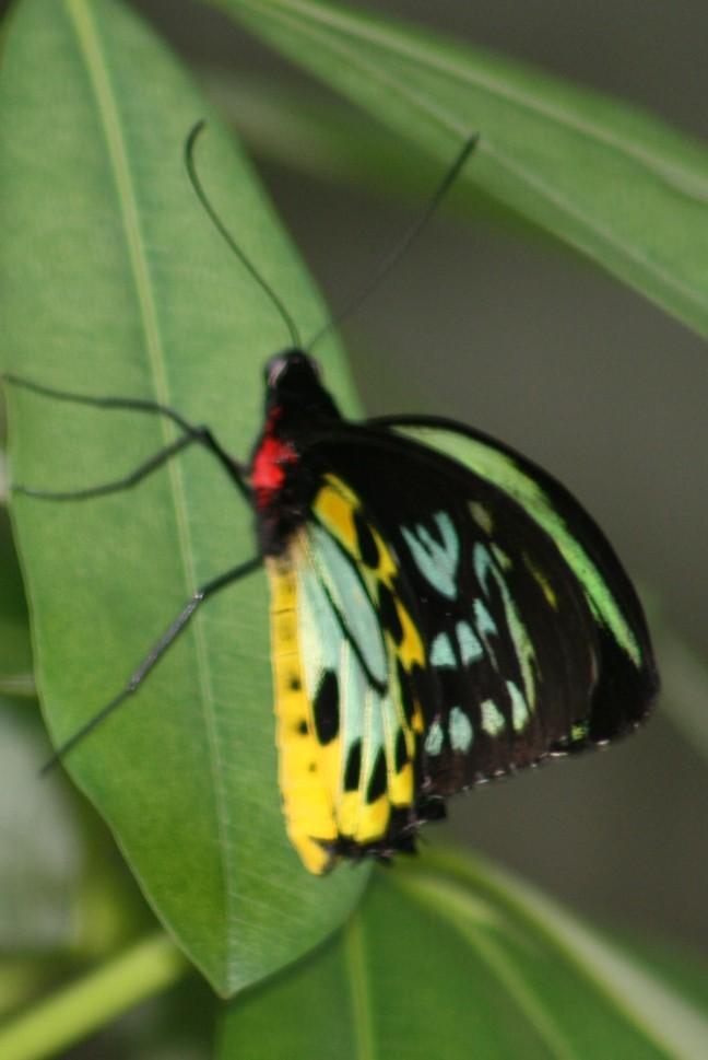 en nog een vlinder