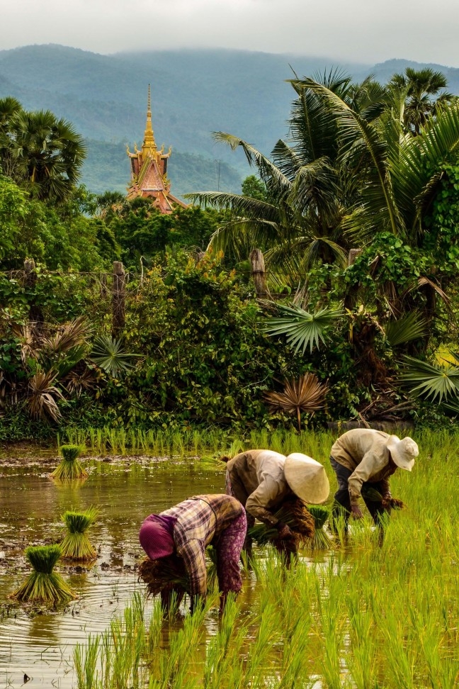 Al het moois uit Cambodja