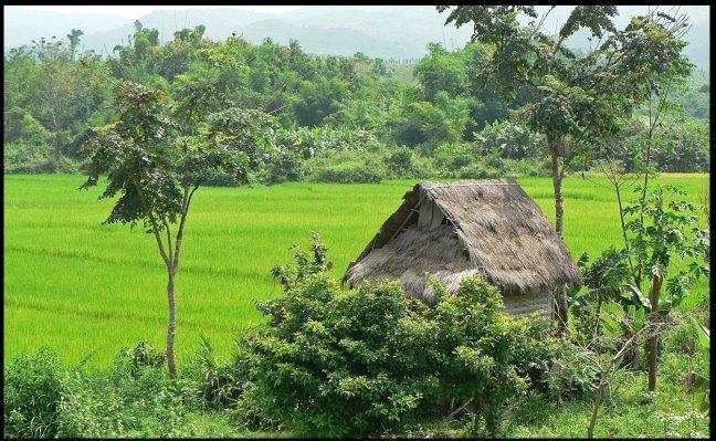 huisje in het groen