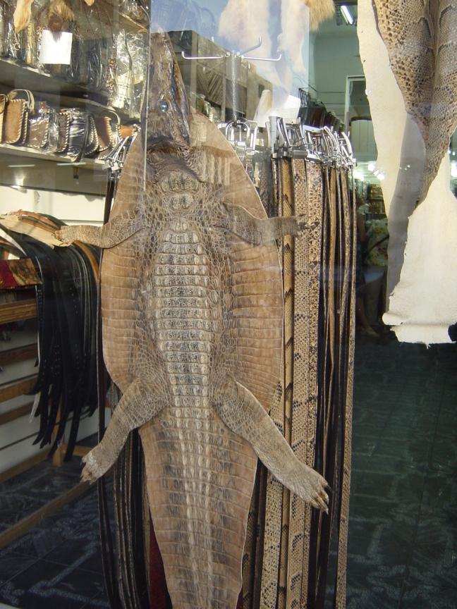 Krokodillenleer