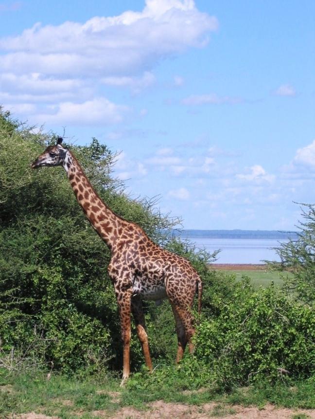 op safari