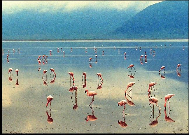 Lake Manyara. 2003.
