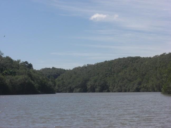 Prachtig varen langs mangrove bossen