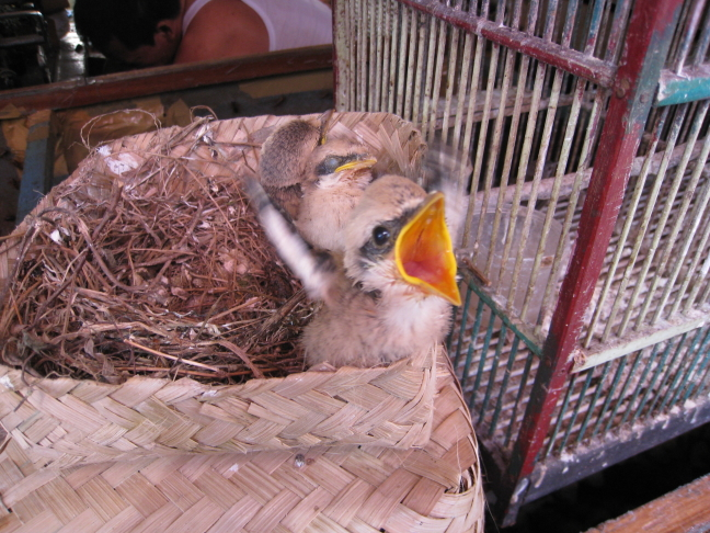 Vogeltje heeft honger