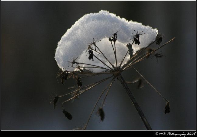 Winterhoed
