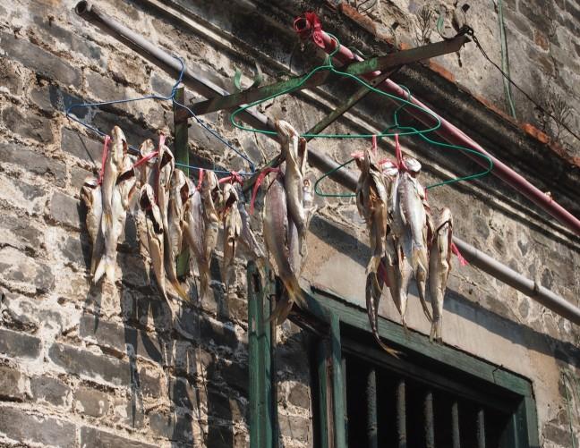 Vis ophangen