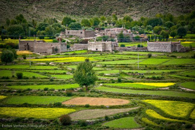 """Tibetaanse """"Vinex"""" wijk"""