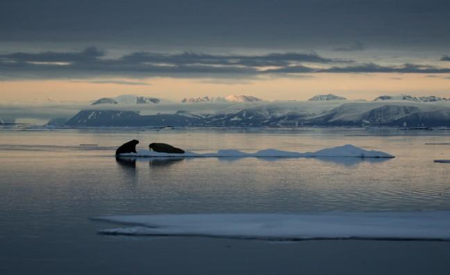 Walrussen bij Moffen