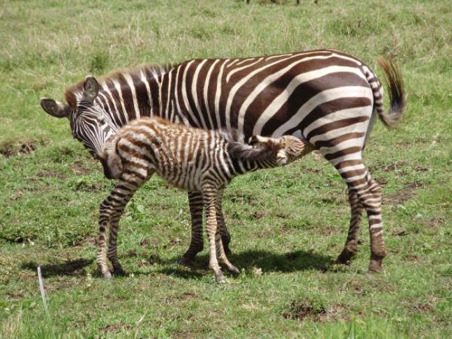 Tanzania - vertederend