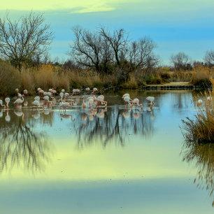 Camargue bezoeken voor de flamingo's