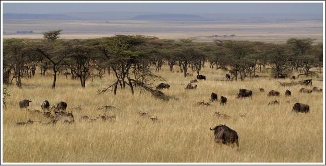 Typisch Kenia