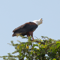 '459676' door vulture1960