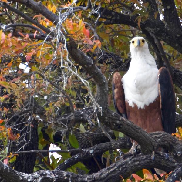 '514940' door vulture1960