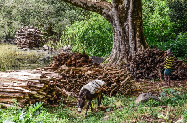 De ezel en het brandhout
