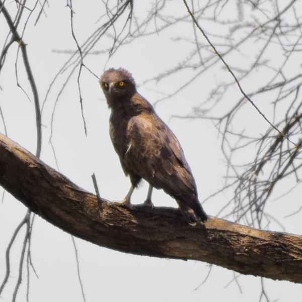 '440295' door vulture1960
