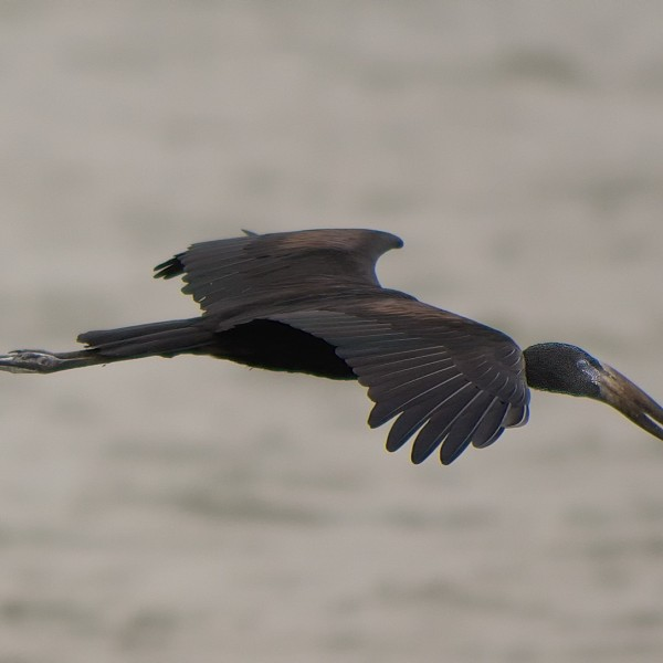 '435779' door vulture1960