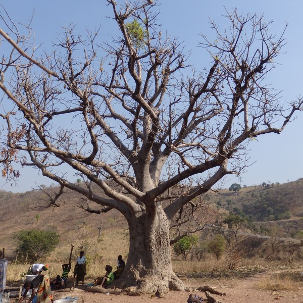 '496110' door afrika