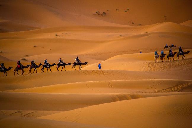 Drukte in de woestijn