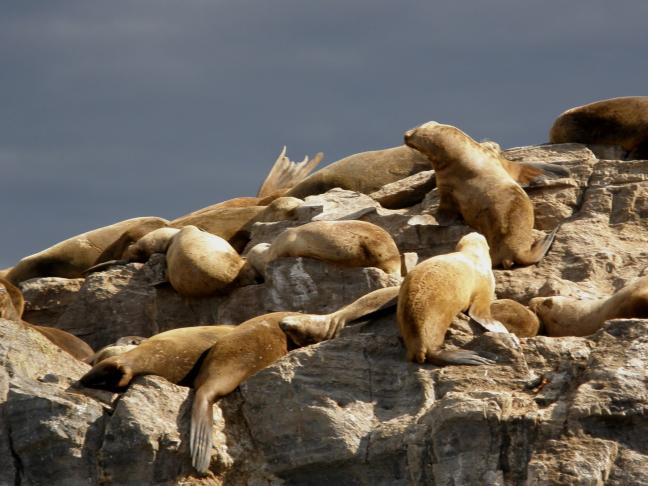 zeeleeuwen genieten van de zon